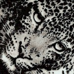 The Wild Side - Exotic Leopard Collage #2