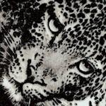 AN-leopard-W858