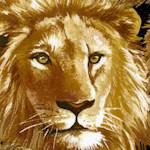 AN-lions-W442