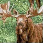 AN-moose-X409