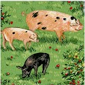 Farm - Real PIgs in the Orchard