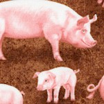 On the Farm: Real Pigs - LTD. YARDAGE AVAILABLE