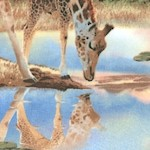 Out of Africa - Peaceful Giraffes on the Plains by Howard Robinson - BACK IN STOCK!