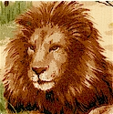 Safari Collection - Real Lions on the Plains by Sara Morgan