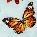Sandy's Garden - Magnificent Real Butterflies