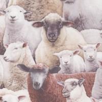 AN-sheep-R228