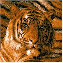 AN-tigers-S532