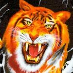 AN-tigers-W312