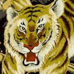 AN-tigers-Y832