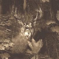 AN-woods-R586
