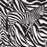 3-D Zebras
