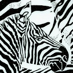 Exotic Zebras in Black and White