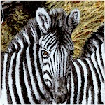 Animal Adventure - Stripes in the Savannah
