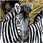 Animal Adventure - Stripes in the Savannah