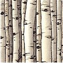 Countryside - Packed Birch Trees- BACK IN STOCK!