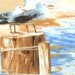 NAU-beach-W443