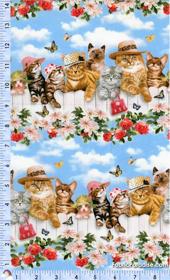 CAT-cats-Y223