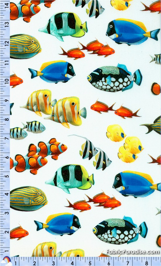 FISH-coralreef-Y144