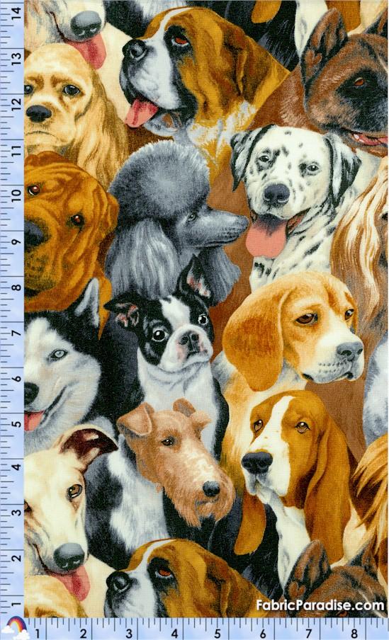 DOG-dogs-Y187