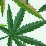 Herb - Bright Cannabis Leaves on Ivory