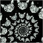 CAT-cats-Y116