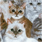 Allover Cats by Wild Wings