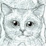 CAT-cats-Y356