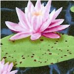 Blue Heron - Serene Water Lilies