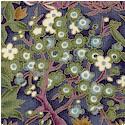 Kimono Collection - Gilded Foliage