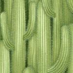 SW-cactus-W843