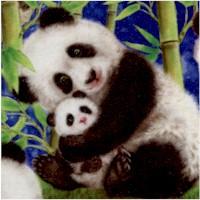 Panda Sanctuary - Happy Panda Bears on Blue