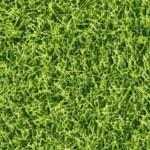 SP-grass-W203