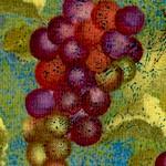 Crush - Tossed Grapes #2 by Sue Zipkin