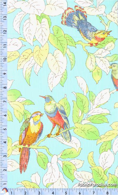 BI-birds-P721