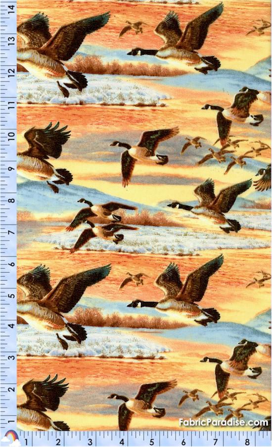 BI-ducks-W618