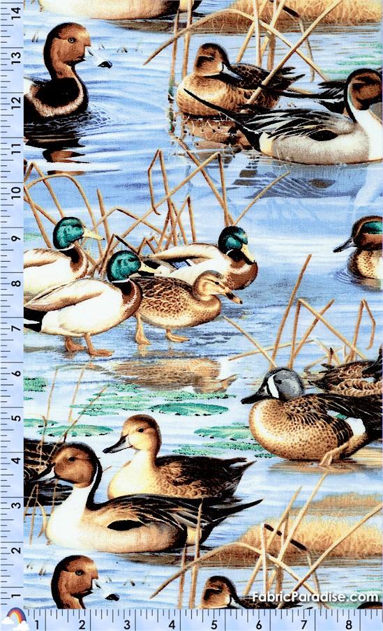 BI-ducks-W620