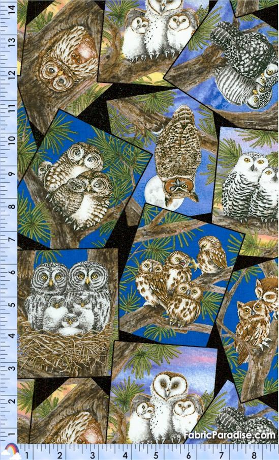 BI-owls-X556