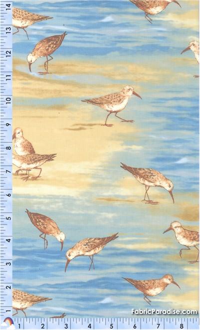 BI-sparrows-S142