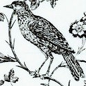 Aviary - Beautiful Bird Toile in Black and Ivory