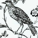 BI-aviary-S882