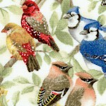 Housing Boom - Beautiful Songbirds - BACK IN STOCK!