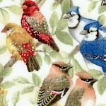 BI-birds-W887