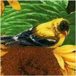 BI-birds-Y14