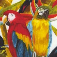 Birds of Paradise - Exotic Colorful Birds