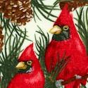 CHR-cardinals-S231