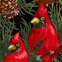 Season's Greetings - Beautiful Cardinals in Pine Trees on Black