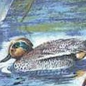 Sunbathing Ducks at the Pond
