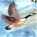 BI-ducks-L424