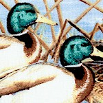 Duck  Duck  Goose -  Mallard Scenes by Cynthia Fisher