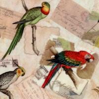 Exotic Birds and Correspondence